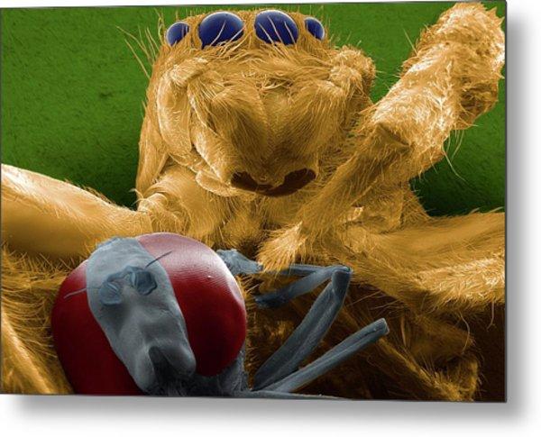 Jumping Spider Catching Prey Metal Print