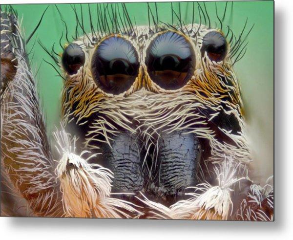 Jumping Spider Metal Print by Nicolas Reusens