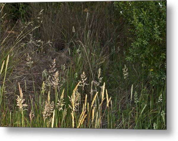 June Grass Metal Print by Larry Darnell
