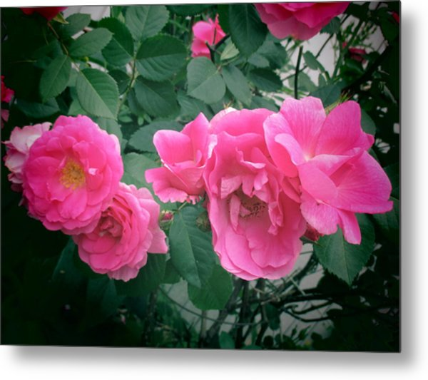 June Rose II Metal Print