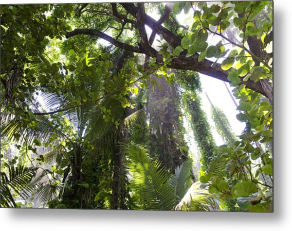 Jungle Canopy Metal Print