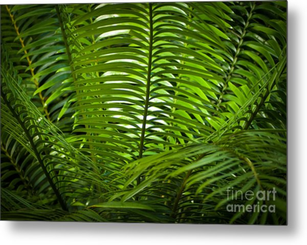 Jungle Fern Metal Print