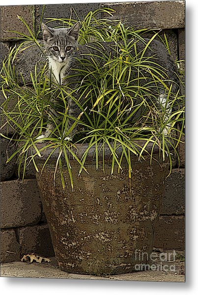 Jungle Kitty All Profits Go To Hospice Of The Calumet Area Metal Print