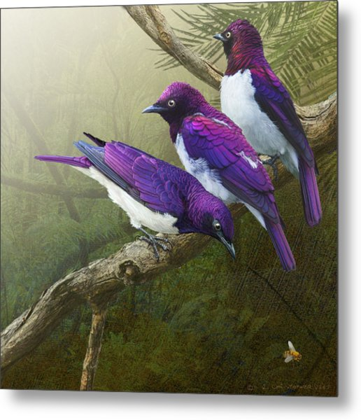 Jungle Mist -amethyst Starlings   Metal Print by R christopher Vest