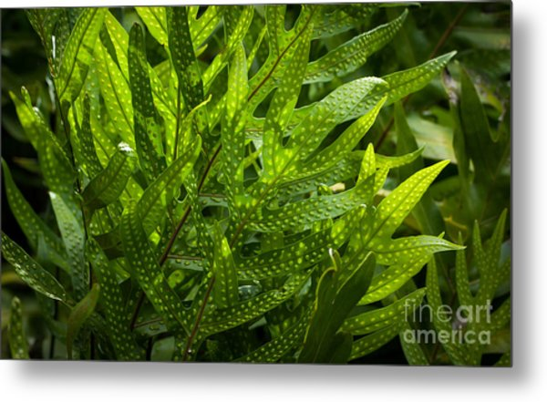 Jungle Spotted Fern Metal Print