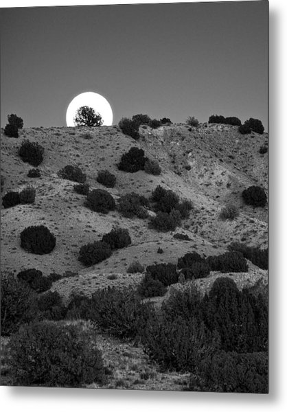 Metal Print featuring the photograph Juniper At Moonrise by Mary Lee Dereske