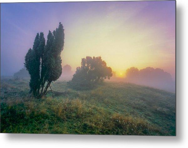 Juniper Trees In Early Morning Fog  Metal Print by Martin Liebermann
