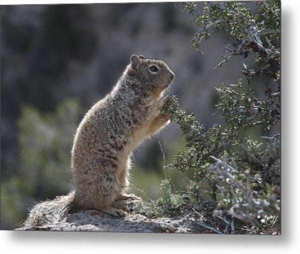Just A Squirrel Metal Print
