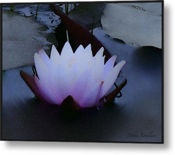 Just A Touch  Metal Print by Debra     Vatalaro
