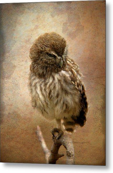 Just Awake Little Owl Metal Print