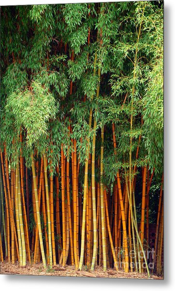 Just Bamboo Metal Print