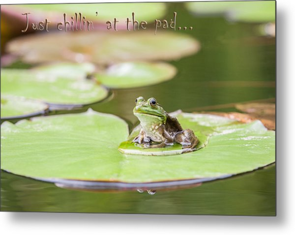 Just Chillin At The Pad Metal Print by Jeff Abrahamson