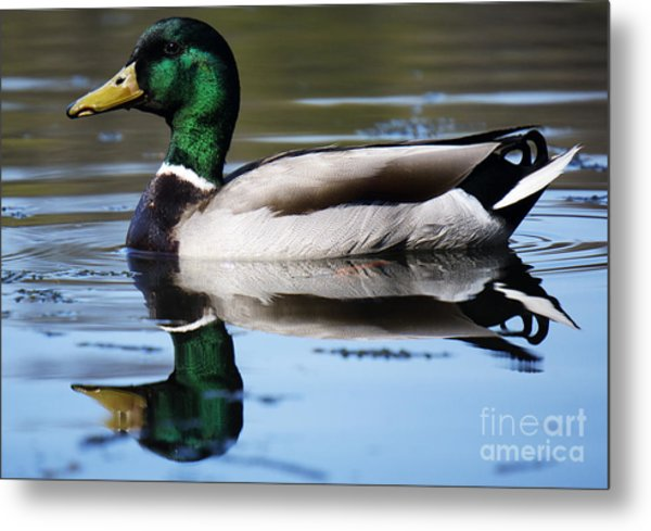Just Ducky. Metal Print