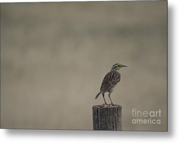 Western Meadowlark On A Fence Post Metal Print