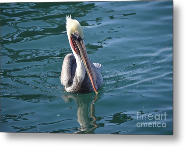 Metal Print featuring the photograph Just Wading by Laurie Lundquist