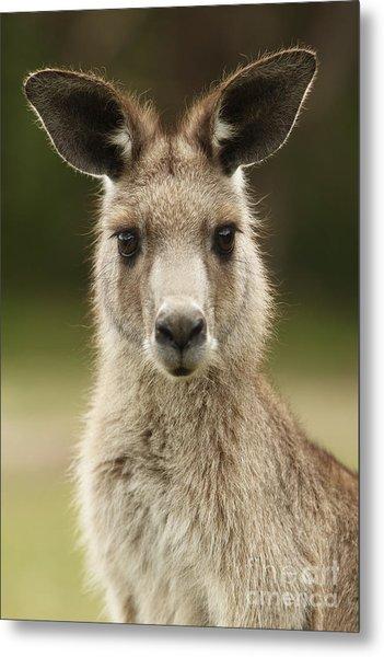 Kangaroo Metal Print