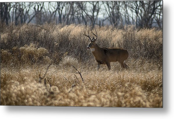 Kansas Whitetail Metal Print