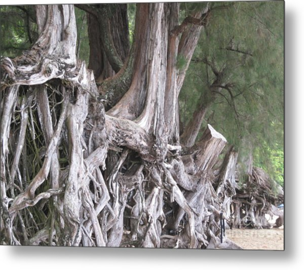 Kauai - Roots Metal Print