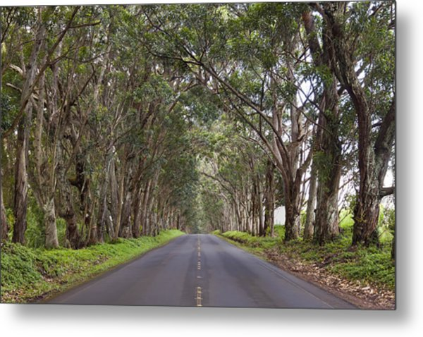 Kauai Tree Tunnel Road Metal Print
