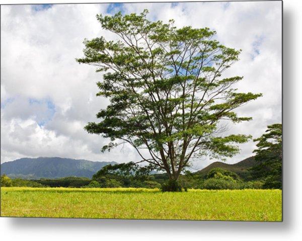 Kauai Umbrella Tree Metal Print