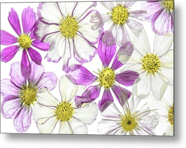 Keeping Summer Metal Print by Mandy Disher