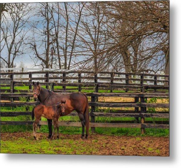 Kentucky Mare And Foal Metal Print