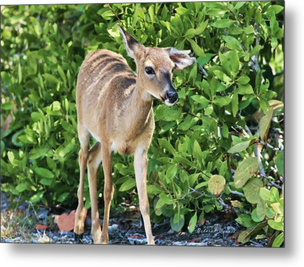 Key Deer Cuteness Metal Print
