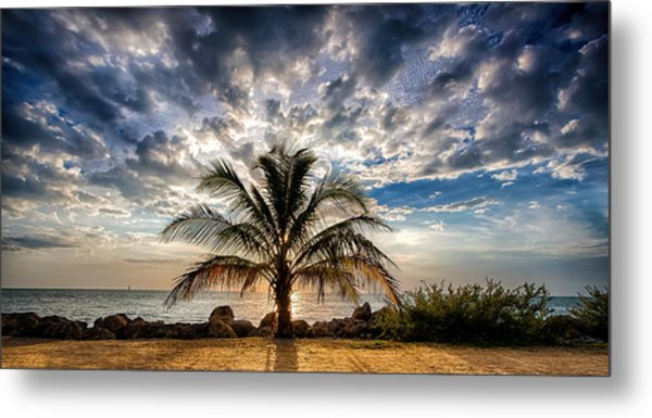 Key West Florida Lone Palm Tree  Metal Print