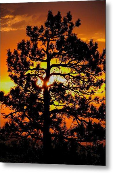 Keystone Pine Metal Print