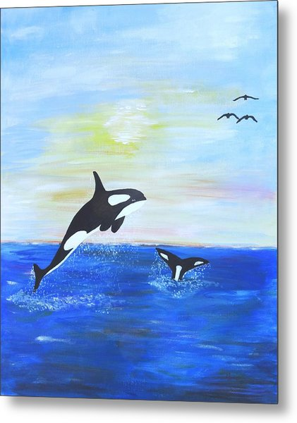 Killer Whales Leaping Metal Print