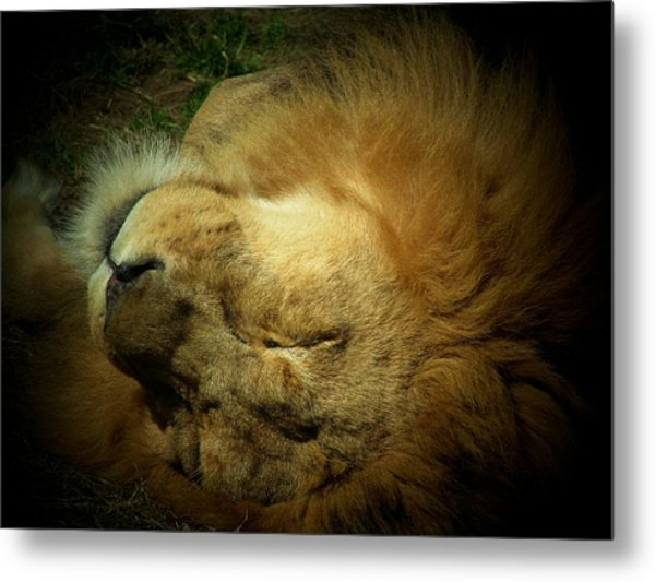 King Of Peace,lion Metal Print