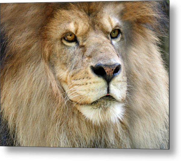 King Of The Beasts Metal Print