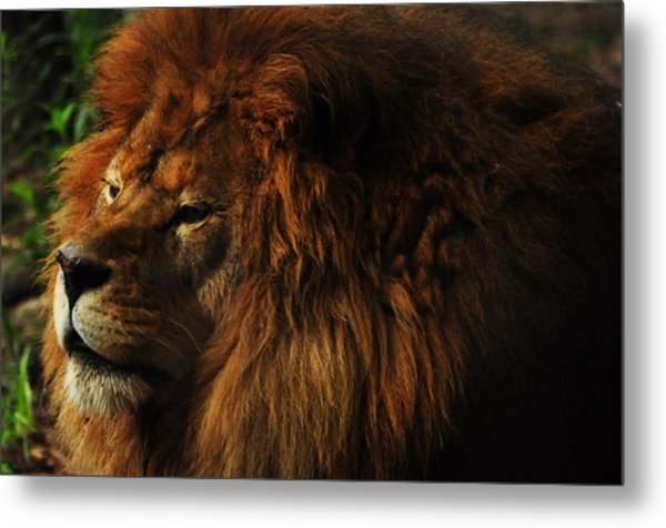 King Of The Jungle Metal Print by Valarie Davis