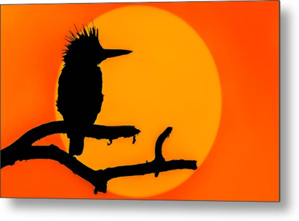 Kingfisher Sunset Metal Print