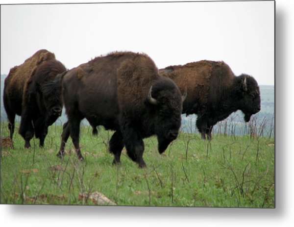 Kings Of The Prairie Metal Print