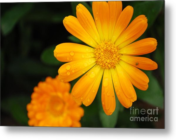 Kissed By Nature Metal Print by Susan Hernandez