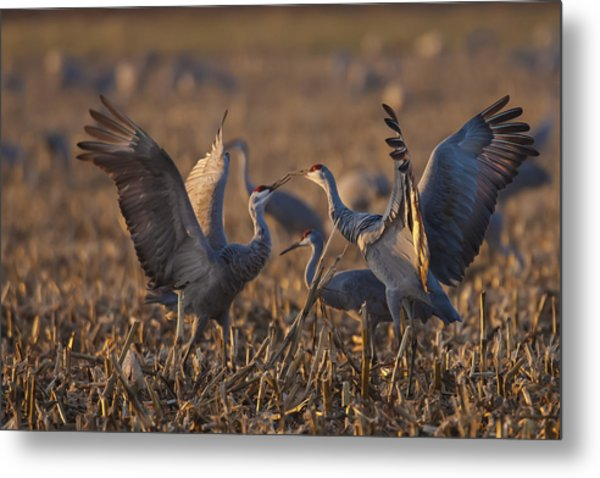 Kissing Sandhills Metal Print