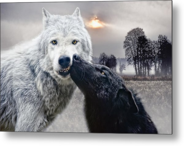Kissing Wolves Metal Print