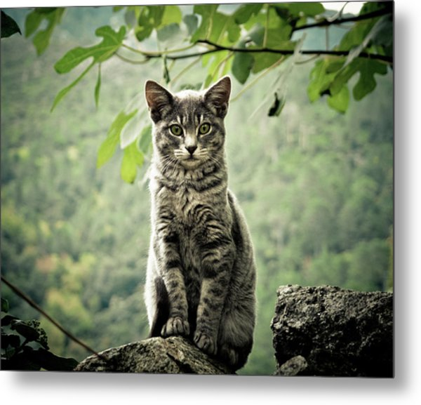 Kitten Metal Print by By Corsu Sur Flickr