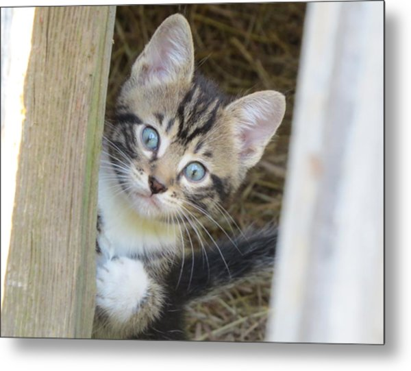 Kitten Metal Print by Diane Mitchell