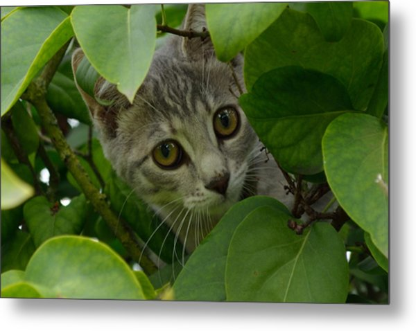 Metal Print featuring the photograph Kitten In The Bushes by Scott Lyons