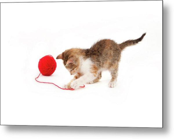 Kitten Playing With A Ball Of Red Wool Metal Print by By Kerstin Claudia