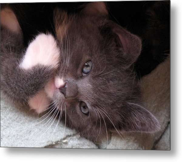 Kitty Cuteness Metal Print