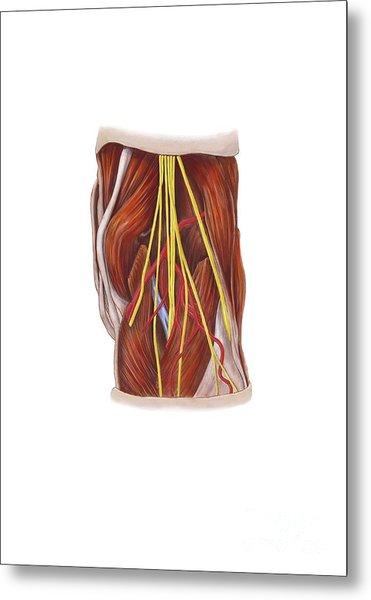 Knee Nerve Plexus, Artwork Metal Print