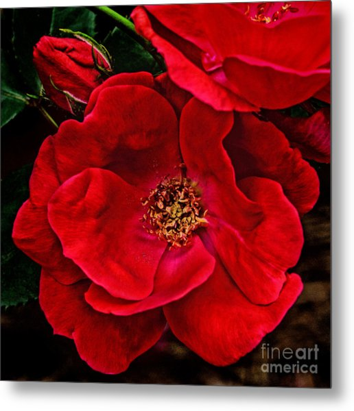 Knockout Red Metal Print