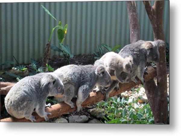 Koala Team Metal Print