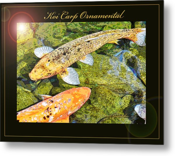 Koi Carp Goldfish Ornamental Framing Print Metal Print