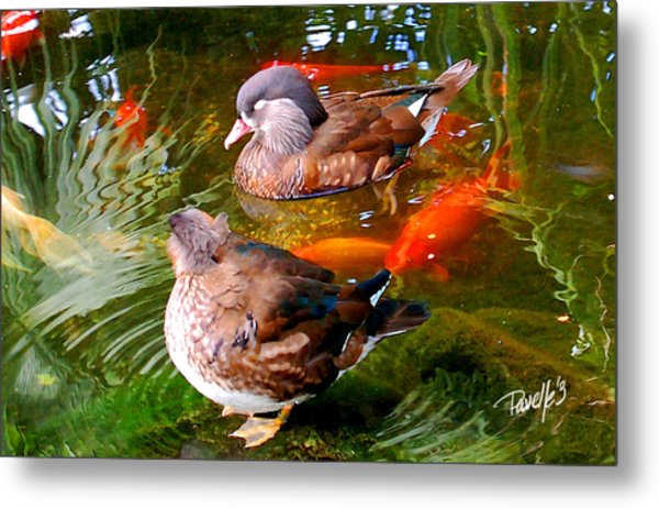 Koi Pond Ducks Metal Print