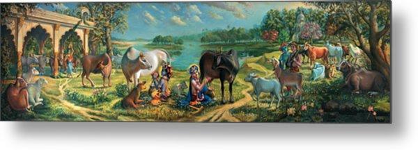 Krishna Balaram Milking Cows Metal Print