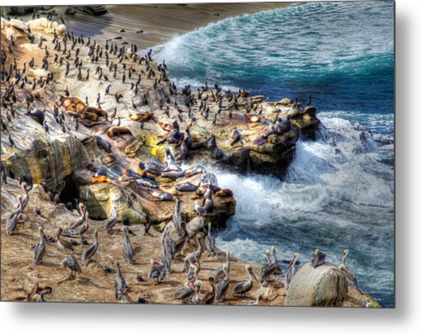 La Jolla Cove Wildlife Metal Print